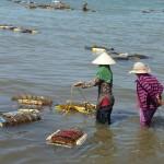 Kep : le panier de crabes !